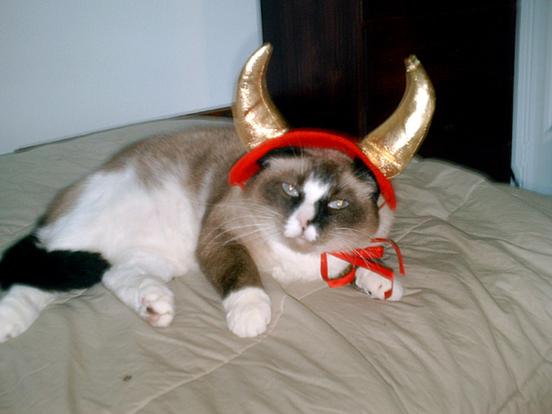 halloween costumes for kids and cats